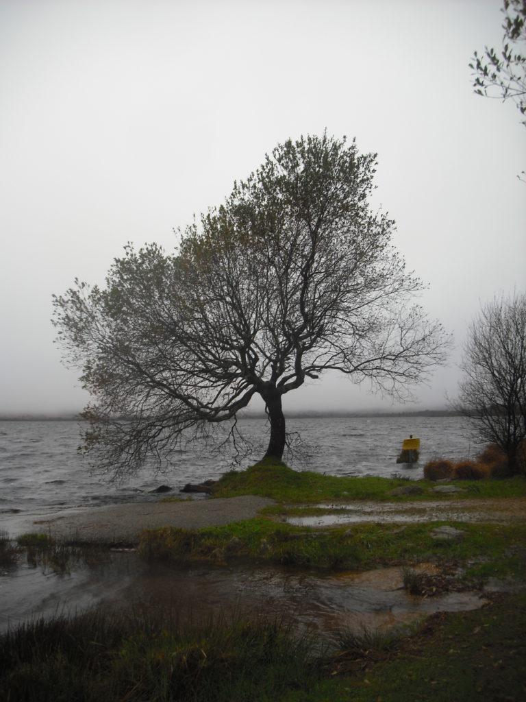 La imagen tiene un atributo ALT vacío; su nombre de archivo es arbre-3.jpg